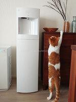 mmiiさんフレシャス「スラット+カフェ」マットホワイト、サーバーと猫の写真